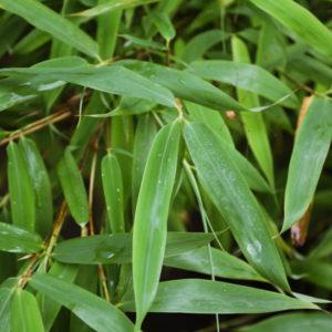 Gräs & bambu