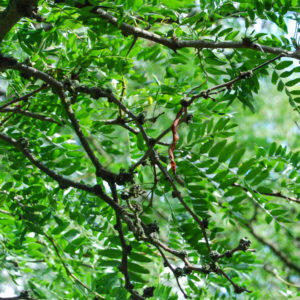 Buskar & Träd